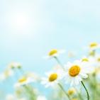 Sommer Blumen 141x141